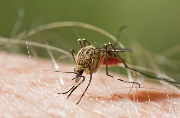 Малярийные комары каждый год заражают малярией сотни тысяч людей
