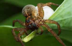 Природные способности пауков на службу человеку
