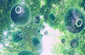 Фотосинтез для солнечных батарей