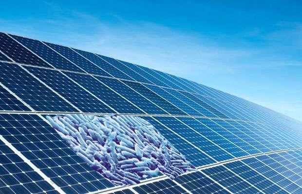 Бактериальные солнечные панели